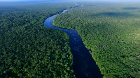 vídeos y material grabado en eventos de stock de vista aérea de la selva amazónica en brasil - región del amazonas
