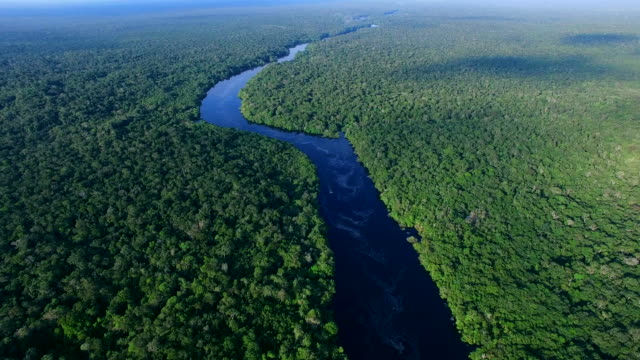 aerial view of amazon rainforest in brazil - brazil stock videos & royalty-free footage