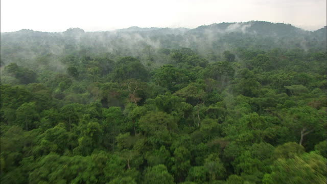 aerial view of amazon rainforest - 雨林点の映像素材/bロール