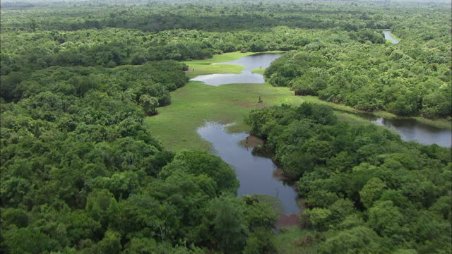 aerial view of amazon river - amazon region stock videos & royalty-free footage