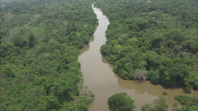 aerial view of amazon river - rio delle amazzoni video stock e b–roll