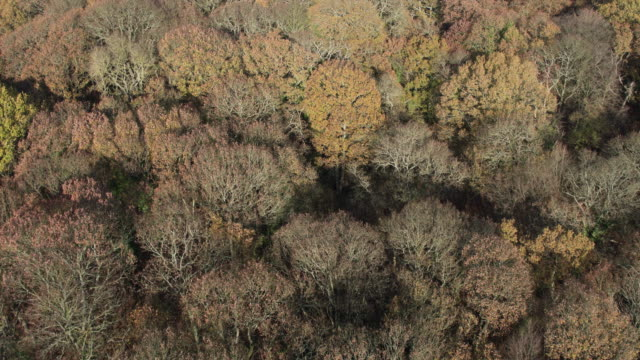 aerial view of an ancient forest - beauty stock videos & royalty-free footage