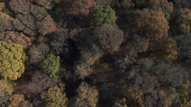 aerial view of an ancient forest - environmental issues stock videos & royalty-free footage