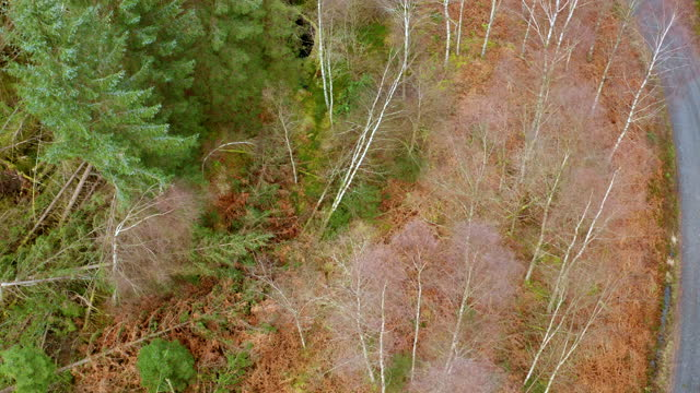 aerial view of an area of scottish forest - forestry industry stock videos & royalty-free footage