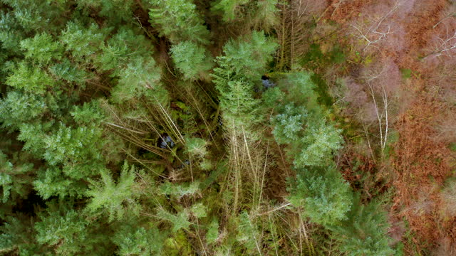 aerial view of an area of scottish pine forest - forestry industry stock videos & royalty-free footage