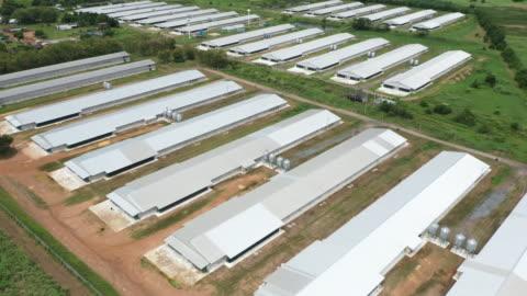 vídeos y material grabado en eventos de stock de vista aérea de la granja de animales - ave de corral