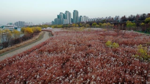stockvideo's en b-roll-footage met luchtfoto van appartementencomplex in de buurt van dongjak station, zuid-korea in fall gebladerte of herfst blad kleur - korea