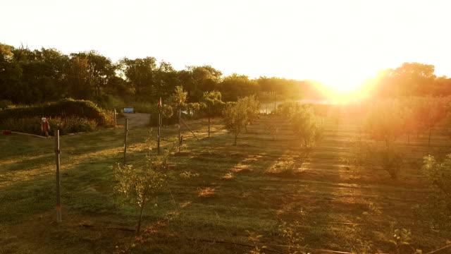 vidéos et rushes de vue aérienne de pommiers, de légumes sur le jardin et le lac réfléchissant au coucher du soleil - pomme