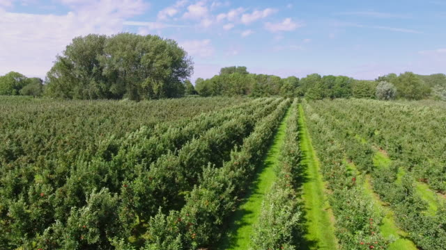 "stockvideo's en b-roll-footage met luchtfoto van apple plantage in ""altes land"" in de buurt van hamburg, duitsland - boomgaard"