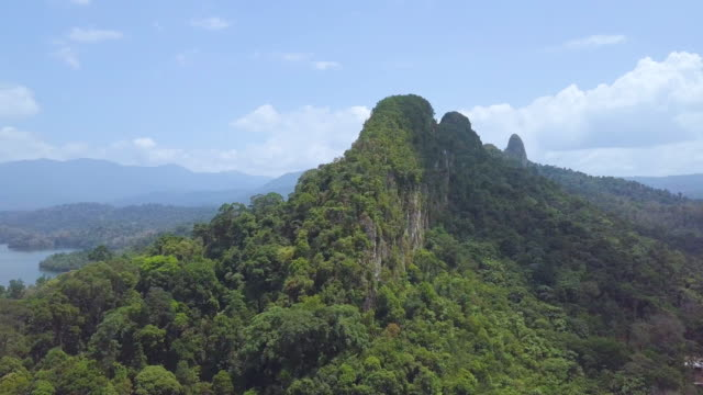 aerial view of  asia rainforest - rainforest stock videos & royalty-free footage