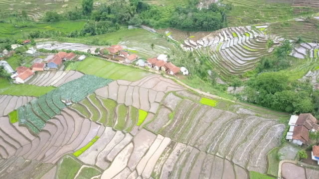 stockvideo's en b-roll-footage met aerial view of asian agricultural field & activity - agrarisch beroep
