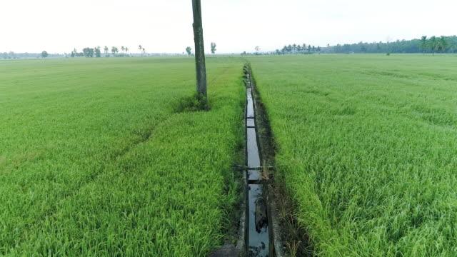 vídeos de stock, filmes e b-roll de aerial view of asian paddy field - árvore tropical