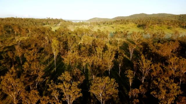 Aerial view of australian savannah