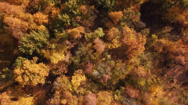 vidéos et rushes de aerial view of autumn forest. drone footage - horizontal