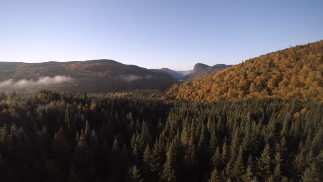 aerial view of autumn landscape nature, quebec, canada - industria forestale video stock e b–roll