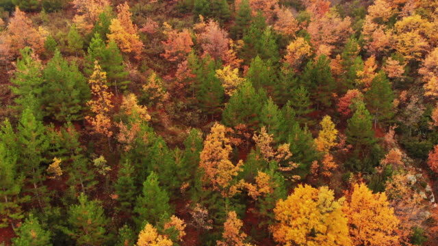 aerial view of autumn trees and landscape - maple tree stock videos and b-roll footage