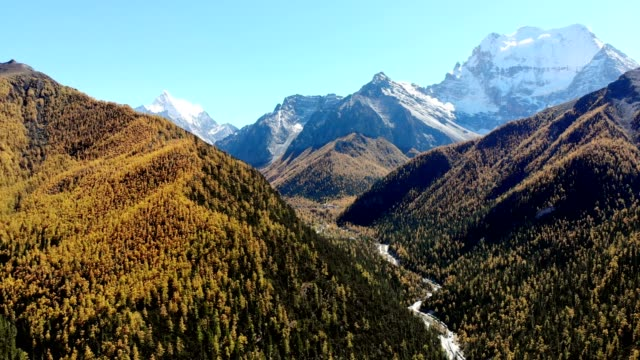 aerial view of autumn valley with pine forest and snow mountain background at yading nature reserve - yunnan province stock videos and b-roll footage