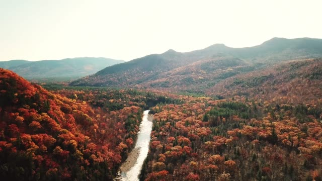 aerial view of autumnal tree at dusk in new england - vermont stock videos & royalty-free footage