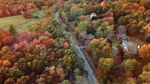aerial view of autumnal tree at dusk in new england - massachusetts stock videos & royalty-free footage