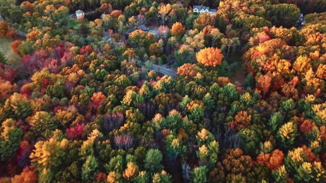 aerial view of autumnal tree at dusk in new england - oak tree stock videos & royalty-free footage