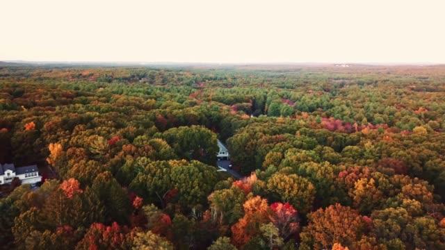 vídeos y material grabado en eventos de stock de vista aérea del árbol otoñal al atardecer en nueva inglaterra - panorámica