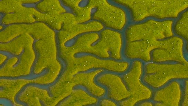 aerial view of bahía de cádiz natural park - 湿地点の映像素材/bロール