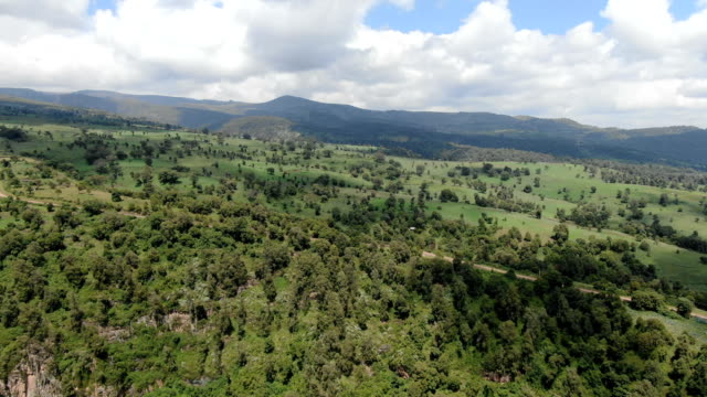 vídeos de stock e filmes b-roll de aerial view of bale mountains forest with hagenia and juniper trees - one of last remaining natural habitats in ethiopia - etiópia