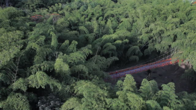 MS Aerial View of bamboo forest and bridge / Armenia, Quindio, Colombia