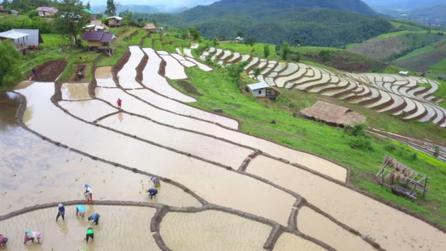 aerial view of ban pa pong piang rice terraces field during plantation in rainy season, chiangmai province of thailand. - rice paddy stock videos and b-roll footage
