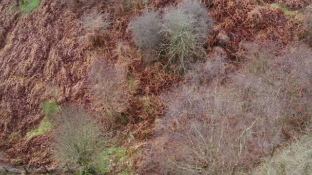 鈍い曇りの春の日に裸の落葉樹としおれたブラッケンの空中写真 - johnfscott点の映像素材/bロール