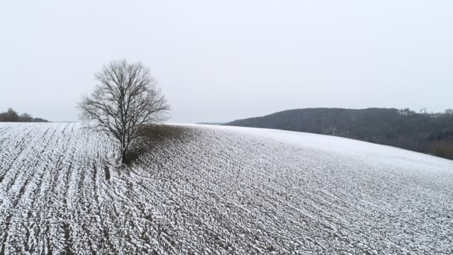 stockvideo's en b-roll-footage met aerial view of bare tree in agricultural field with snow in winter. - bare tree