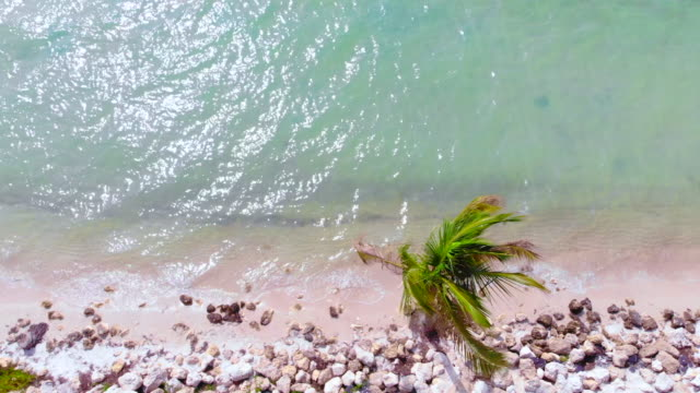aerial view of beach in miami with coconut palm tree. - palm tree stock videos & royalty-free footage