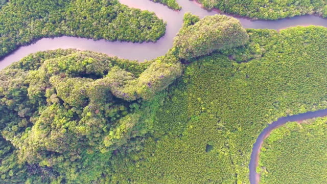 aerial view of beautiful mangrove forest with morning sunlight, phang-nga bay, thailand - thailand stock videos & royalty-free footage