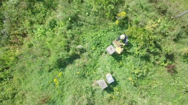 aerial view of beekeeper at work - beehive stock videos & royalty-free footage