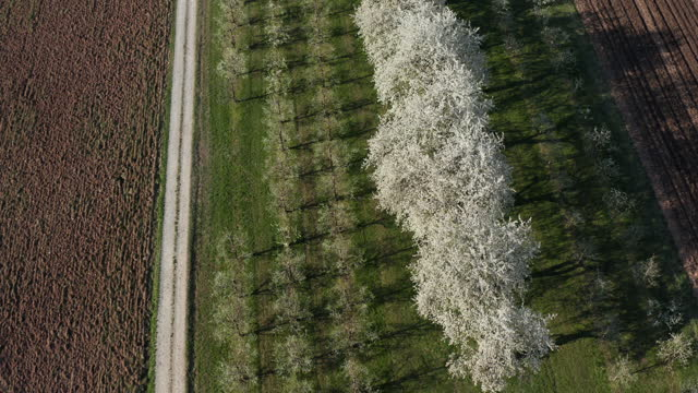 vidéos et rushes de aerial view of blooming fruit trees and empty road, franconia, germany - plan en travelling