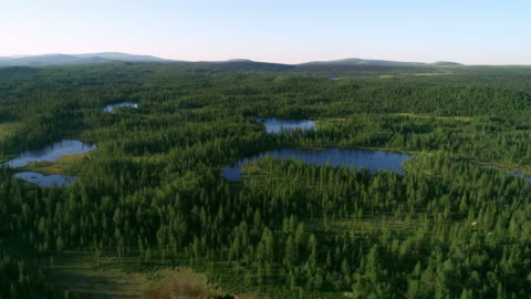 aerial view of blue lakes and green forests on a sunny summer day in finland. - pine tree stock videos & royalty-free footage