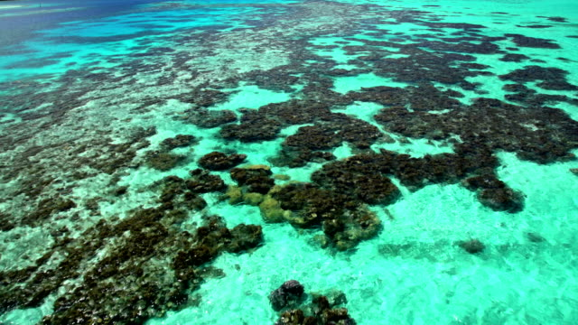 aerial view of bora bora island coral reef - tahiti video stock e b–roll