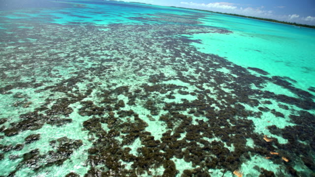 aerial view of bora bora island coral reef - polinesia francese video stock e b–roll