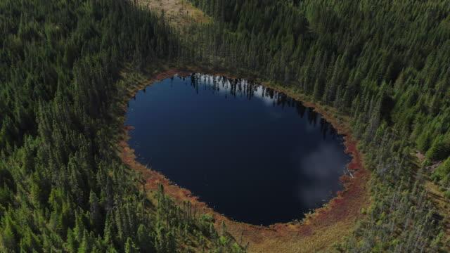 秋のボリアルフォレスト自然と湖の航空写真、ケベック、カナダ - 湖点の映像素材/bロール
