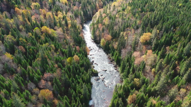 aerial view of boreal forest nature and river in autumn season - rapids river stock videos & royalty-free footage