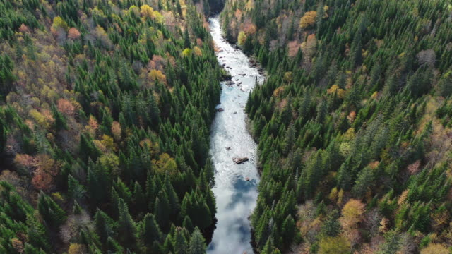 aerial view of boreal forest nature and river in autumn season - flowing water stock videos & royalty-free footage