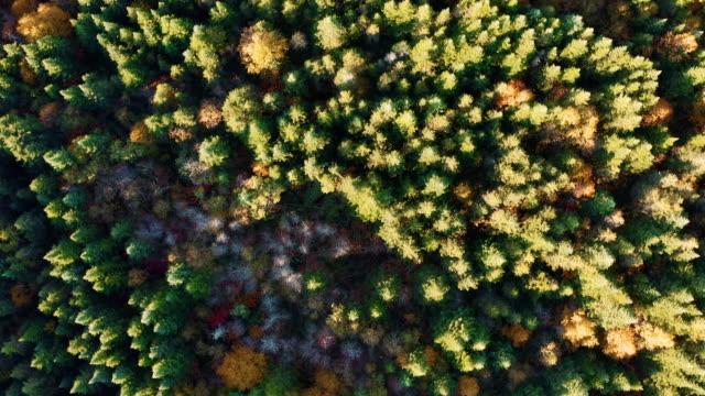 秋の紅葉シーズン日の出、ケベック州、カナダの寒帯の森林自然の空撮 - 寒帯林点の映像素材/bロール