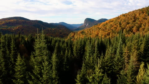stockvideo's en b-roll-footage met luchtfoto van de aard van de boreale bossen in de herfst seizoen bij zonsopgang, quebec, canada - autumn