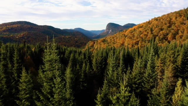aerial view of boreal forest nature in autumn season at sunrise, quebec, canada - flying stock videos & royalty-free footage