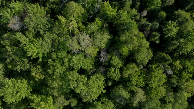 aerial view of boreal forest nature in summer, quebec, canada - mountain peak stock videos & royalty-free footage