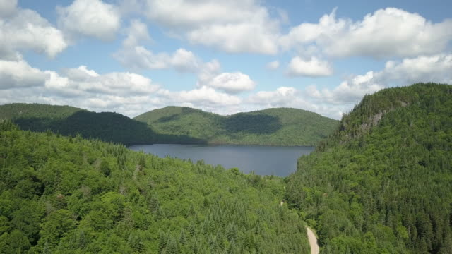 aerial view of boreal nature forest and lake in summer - quebec stock videos and b-roll footage