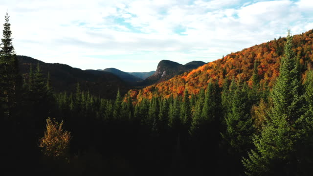 aerial view of boreal nature forest and mountain in autumn at sunrise - rolling landscape stock videos & royalty-free footage