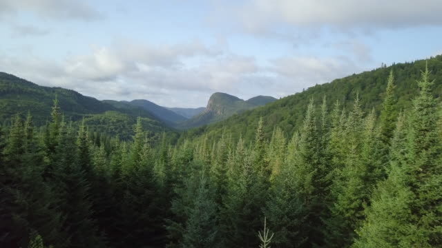 aerial view of boreal nature forest and mountain in summer - air to air shot stock videos and b-roll footage