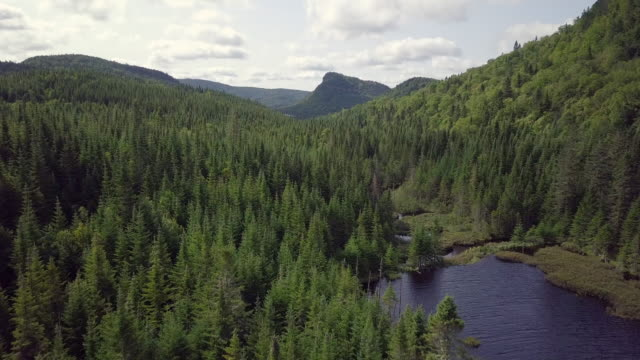 vídeos de stock e filmes b-roll de aerial view of boreal nature forest and mountain in summer - coniferous
