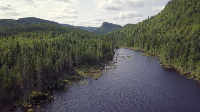 aerial view of boreal nature forest and mountain in summer - loch stock videos & royalty-free footage